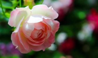 Blumen für einen frischen und reinen Tag der Liebe foto