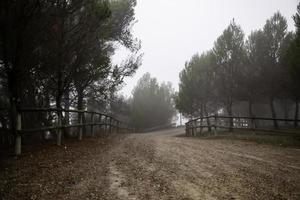 dunkler Wald im Nebel foto