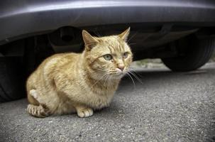 streunende Katze in der Stadt foto
