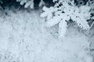 Winterwald frostiger Tag - Nadeln mit weißem Schnee bedeckt Nahaufnahme foto
