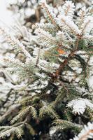 Nahaufnahme eines Fichtenzweigs im Winter unter dem Schnee-Neujahrsbaum und Weihnachtsstimmung foto