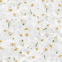 weiße Orchidee nahtlose Textur foto
