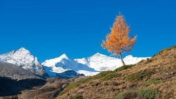 eine bunte lärchenpflanze des herbsts der berg nala foto
