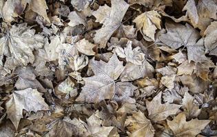 gefrorene Herbstblätter foto