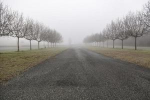 Wald mit Nebel foto