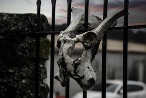 Schädel aus Tierknochen foto