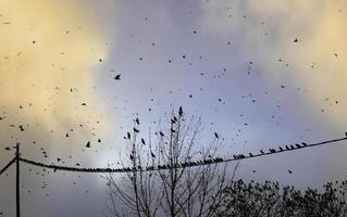 Vögel fliegen in den Himmel foto