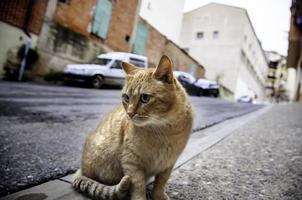 streunende Katzen in der Stadt foto