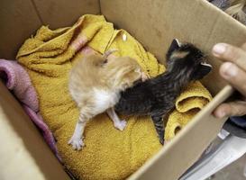verlassene Welpenkatzen in der Kiste foto
