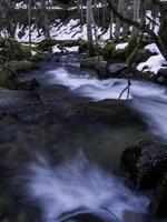 Fluss im gefrorenen Wald foto