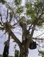 Baum mit hängenden Knochen foto