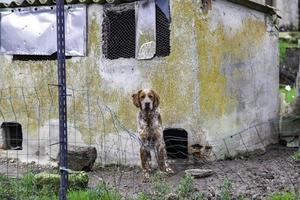Hund im Zwinger foto
