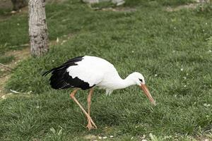 großer Vogelzoo foto