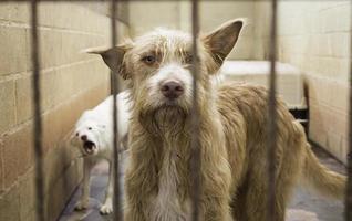Zwingerhunde gesperrt foto