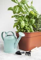 Gartengeräte, Gießkanne und Kräuterpflanzen foto