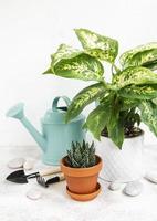 eine Zimmerpflanze in Blumentöpfen und grüner Gießkanne foto