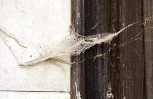 Spinnennetz an der Tür foto