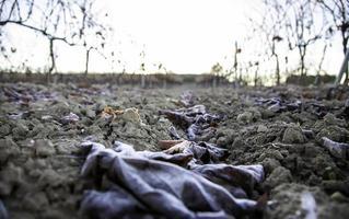 Grassprossen auf dem Boden foto