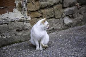 weiße katze ruhe straße foto