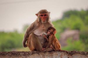 Affenmutter sitzt mit Baby an der Wand foto