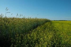 Felder mit verschiedenen Kulturen bepflanzt foto