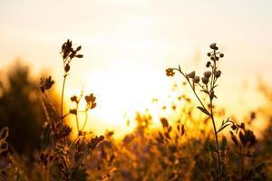 Wiesengras mit schöner Sonnenblendung morgens bei Sonnenaufgang foto