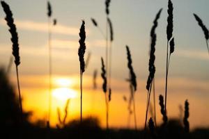 untergehende Sommersonne in der Natur, abendlicher Sonnenuntergang foto