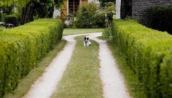 ein hund hält das eigentum ruhig, in frankreich foto