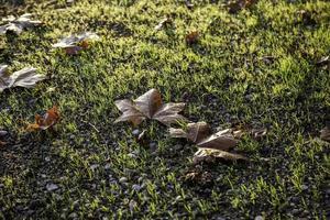 Herbstlaub Boden foto