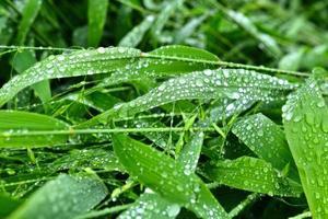 selektiver Fokus. Bild. Nahaufnahme von frischem grünem Laub mit Wassertropfen nach Regen - Bild foto