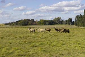die schöne Schafherde im Freien foto
