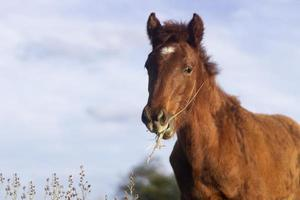 das schöne Pferd beim Essen im Freien foto