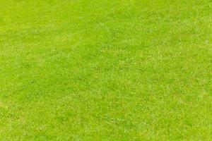 grüner Grasbeschaffenheitshintergrund foto