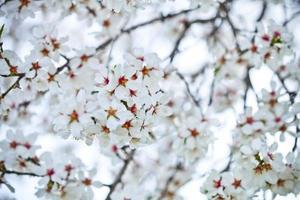 Frühlingsblüten Hintergrund foto
