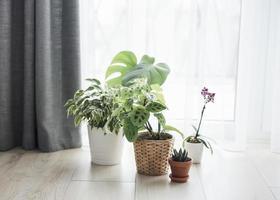 verschiedene Zimmerpflanzen auf dem Boden foto