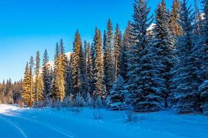 Aussicht vom Bow Valley Parkway. Banff-Nationalpark, Alberta, Kanada foto