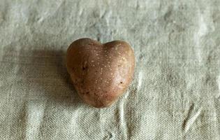 herzförmige Kartoffeln auf Leinenhintergrund. das Konzept der Landwirtschaft, Ernte, Vegetarismus. Valentinstag. quadratisches, hässliches Essen. foto
