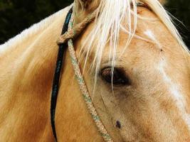 Pferd hautnah foto