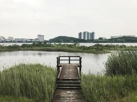 der mit Schilf bewachsene Holzsteg am See von Sokcho City, Südkorea foto