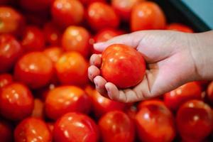 Frauenhand, die Tomate im Supermarkt aufhebt. Frau kauft in einem Supermarkt ein und kauft frisches Bio-Gemüse. Konzept für gesunde Ernährung. foto