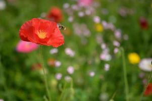 schöne Frühlingsblumen im Garten foto