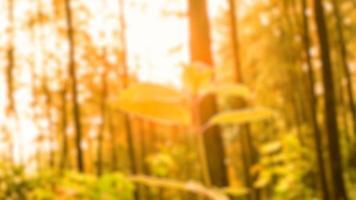 verschwommene Fotos von Naturlandschaften in Wäldern und Reisfeldern, die sehr frisch aussehen