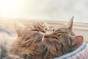 zwei Katzen schlafen im Korb auf Fensterhintergrund. foto