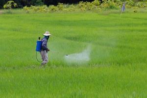 Landwirt, der Pestizide im Reisfeldschutzschädling sprüht foto