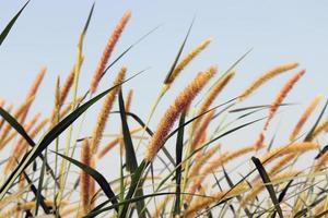 grün gefärbtes Gras fest mit Blüte foto