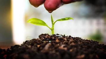 wachsende Pflanzen. Handpflege und Bewässerung von Pflanzen, die auf fruchtbarem Boden mit natürlichem grünem Hintergrund wachsen. foto
