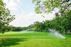 schöner Park und grüne Baumpflanze im städtischen öffentlichen Park. Natur des grünen Grases im Garten im Sommer. natürliche grüne Pflanzen. foto
