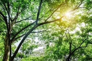 abstraktes grünes Blatt und Baum auf Sonnenaufganghintergrund. Konzept der natürlichen grünen Blätter. foto