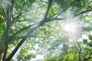 Natur des grünen Blattes im Garten im Sommer. natürliche grüne Pflanzen. foto
