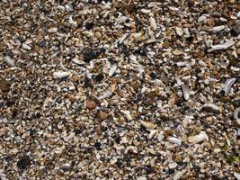 Meereskiesel und Muscheln und Sand. Textur. der Hintergrund foto